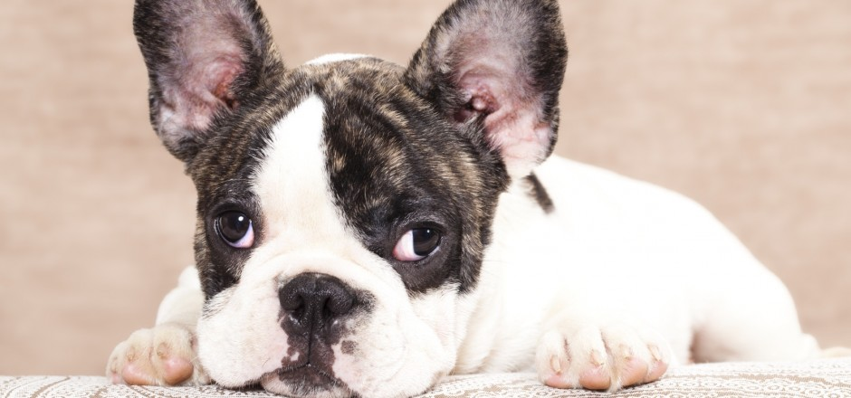 Treating Anxiety In Older Dogs